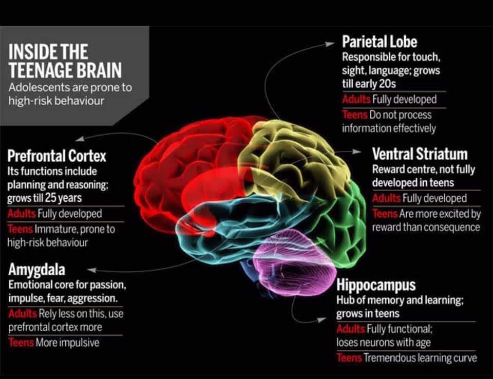 Inside The Teenager U2019s Brain  U2013 Resilience Navigator